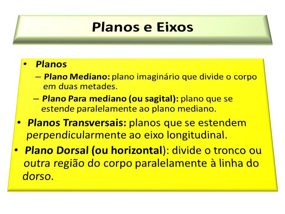 Planos e Eixos Planos. Plano Mediano: plano imaginário que divide o corpo em duas metades.