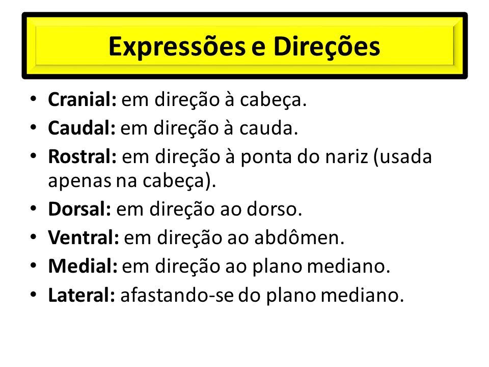 Expressões e Direções Cranial: em direção à cabeça.