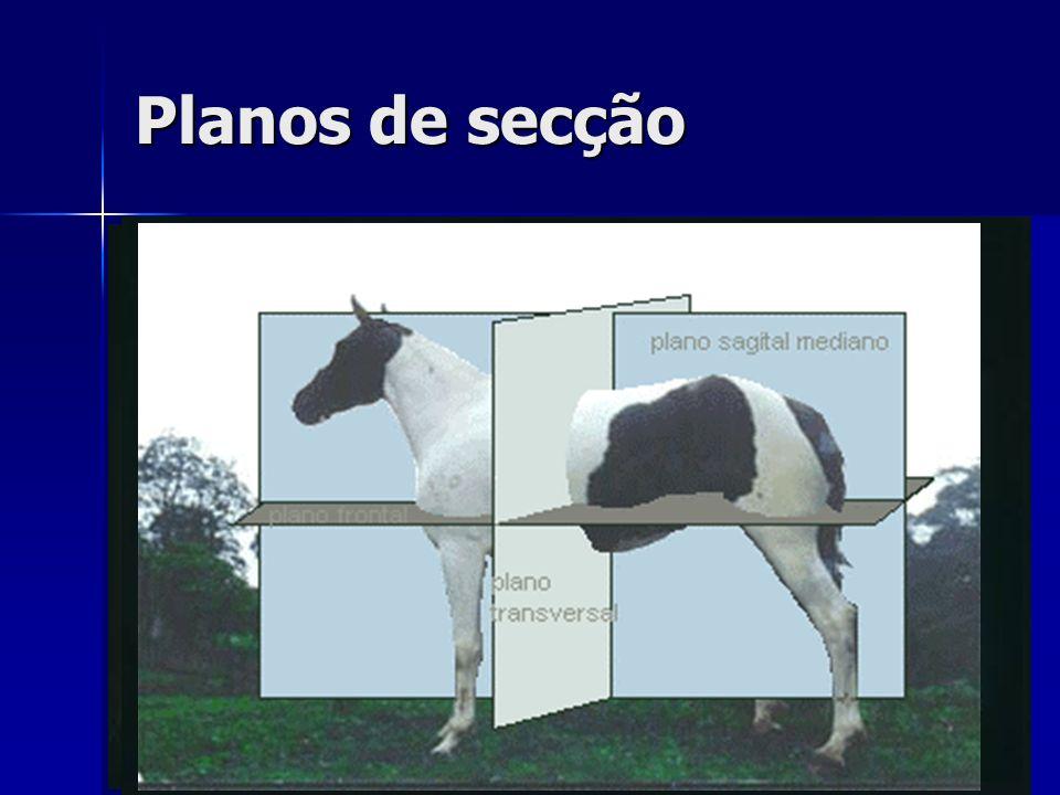 Planos de secção São planos imaginários que fatiam o corpo do animal. Transversais --- Paralelos aos planos cranial e caudal.