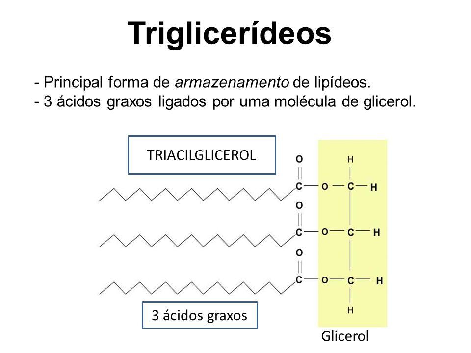 Triglicerídeos - Principal forma de armazenamento de lipídeos.