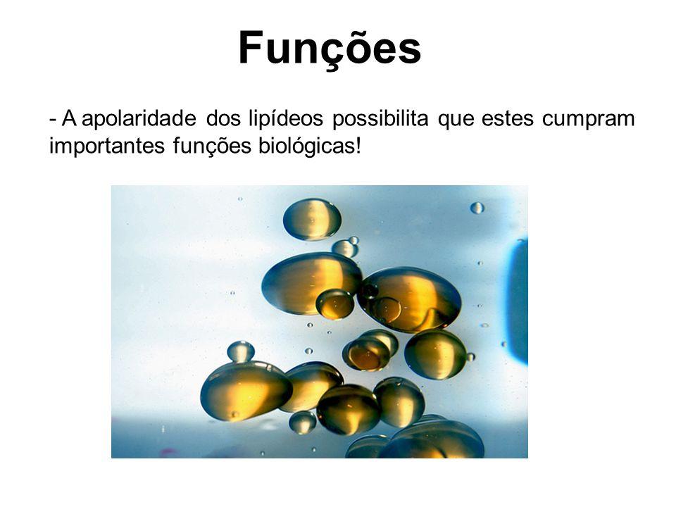 Funções - A apolaridade dos lipídeos possibilita que estes cumpram importantes funções biológicas!