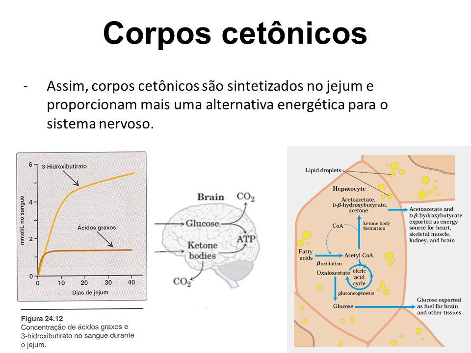 Corpos cetônicos Assim, corpos cetônicos são sintetizados no jejum e proporcionam mais uma alternativa energética para o sistema nervoso.