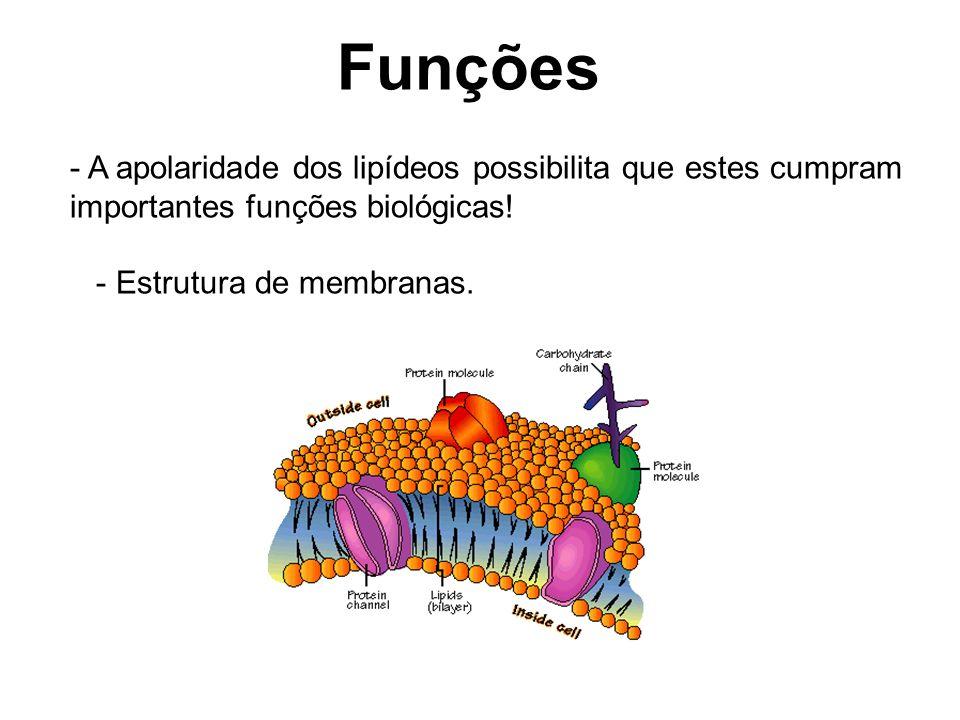 Funções A apolaridade dos lipídeos possibilita que estes cumpram importantes funções biológicas.