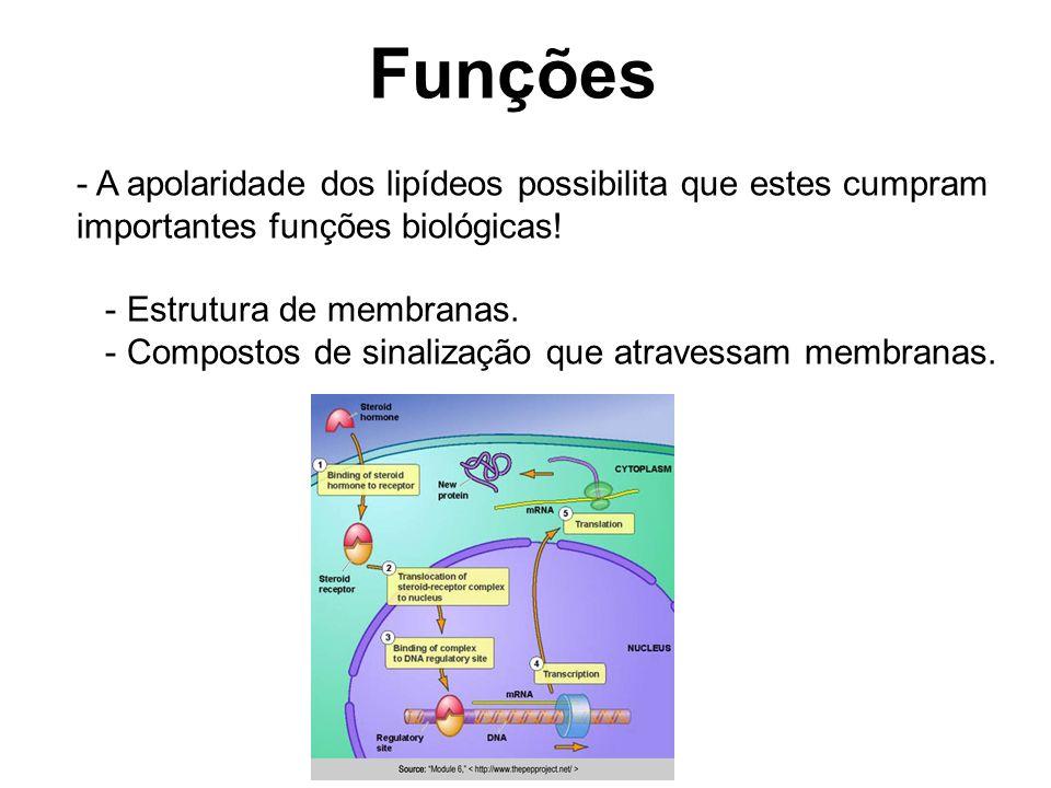 Funções A apolaridade dos lipídeos possibilita que estes cumpram importantes funções biológicas! - Estrutura de membranas.