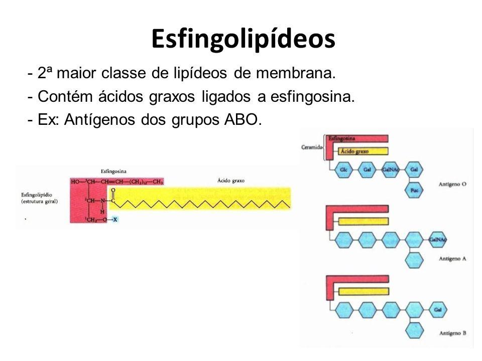 Esfingolipídeos 2ª maior classe de lipídeos de membrana.