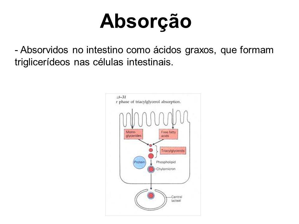 Absorção Absorvidos no intestino como ácidos graxos, que formam triglicerídeos nas células intestinais.