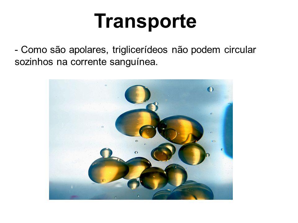 Transporte Como são apolares, triglicerídeos não podem circular sozinhos na corrente sanguínea.