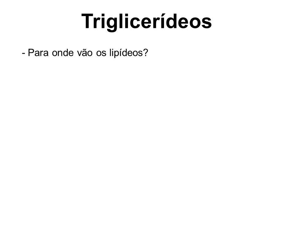 Triglicerídeos - Para onde vão os lipídeos