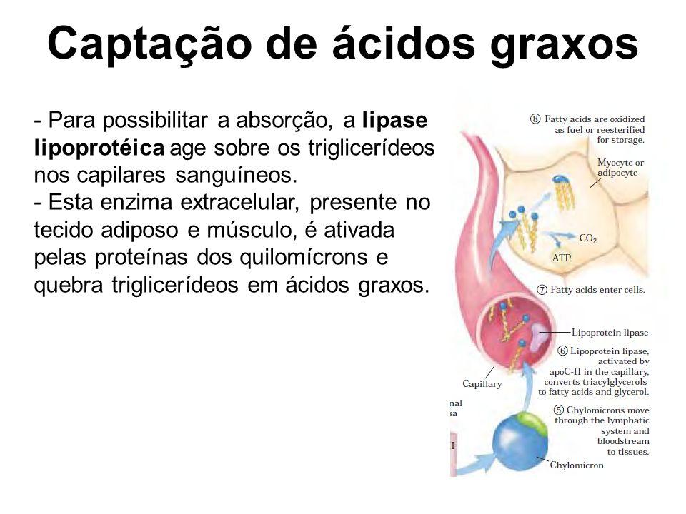 Captação de ácidos graxos