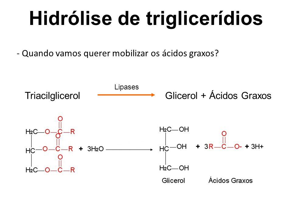 Hidrólise de triglicerídios