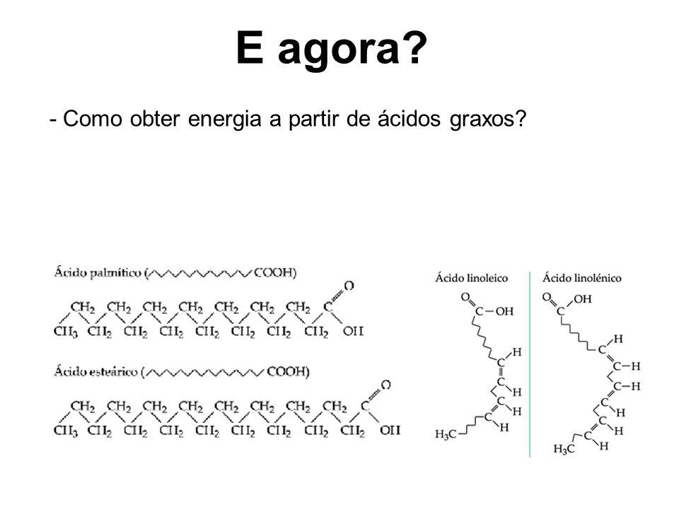 E agora - Como obter energia a partir de ácidos graxos