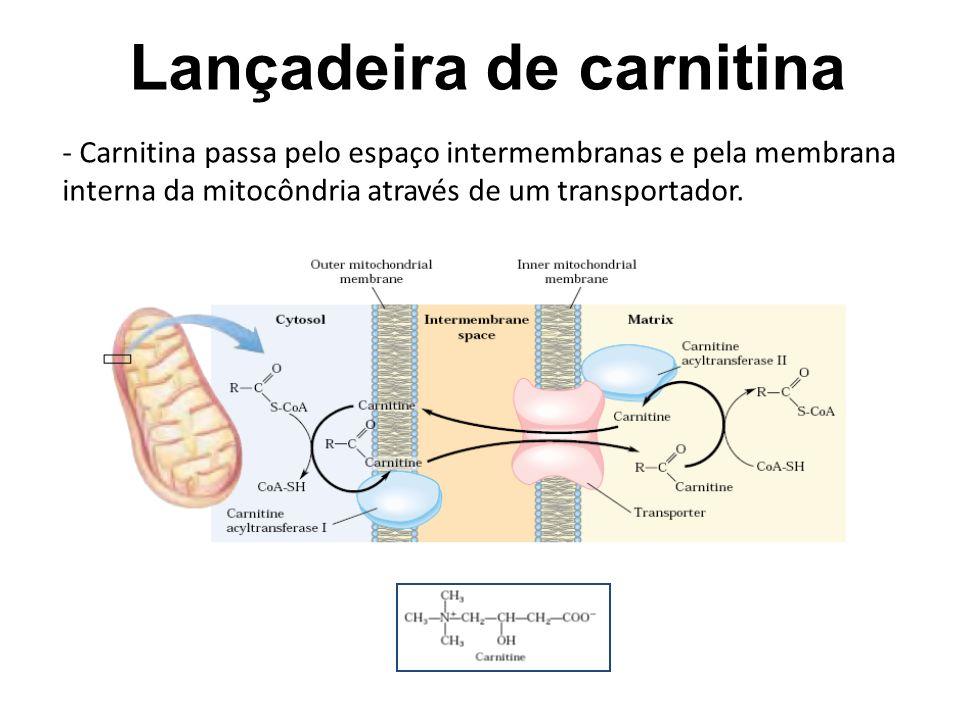 Lançadeira de carnitina