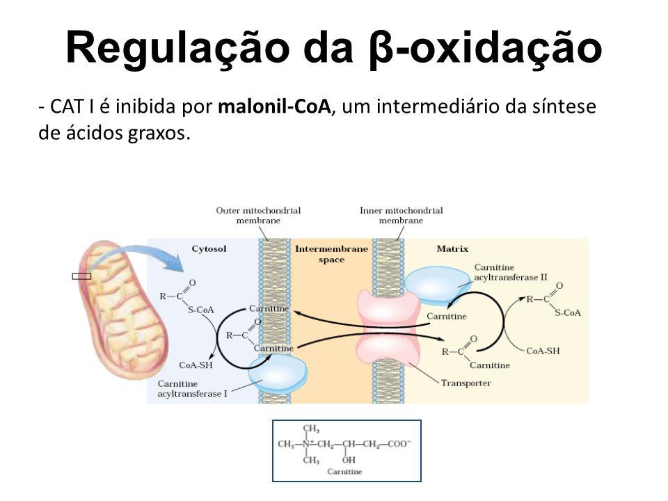 Regulação da β-oxidação