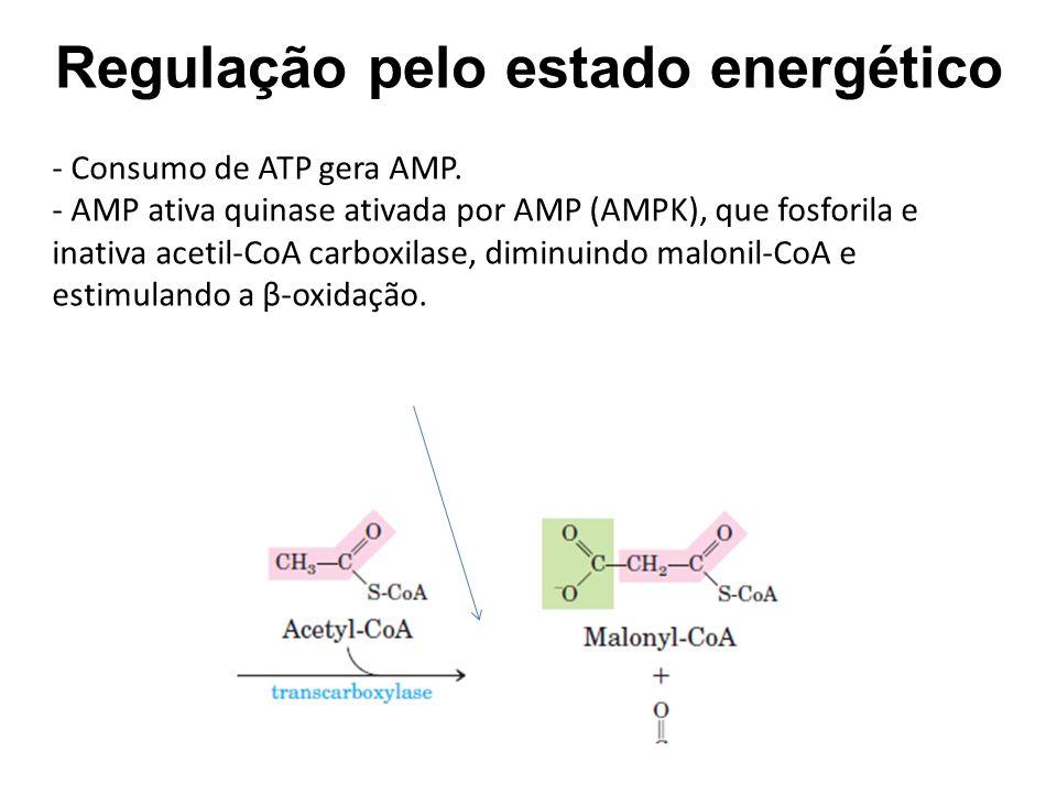 Regulação pelo estado energético