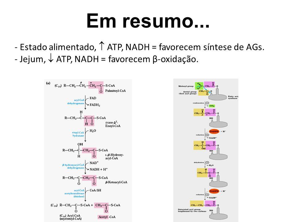 Em resumo... Estado alimentado,  ATP, NADH = favorecem síntese de AGs.