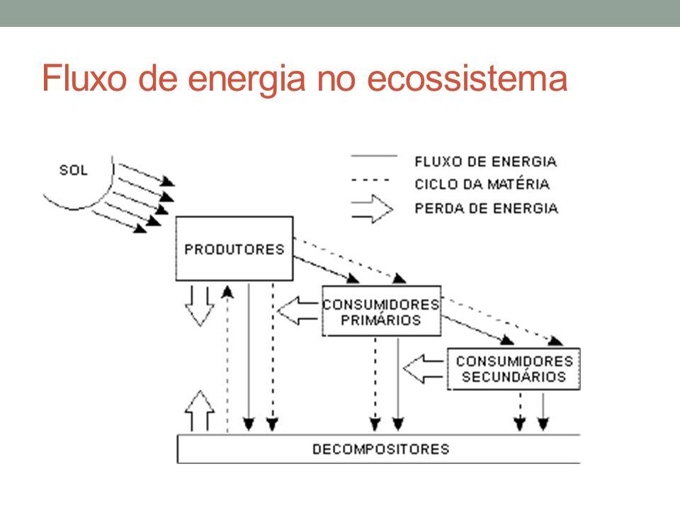 Fluxo de energia no ecossistema