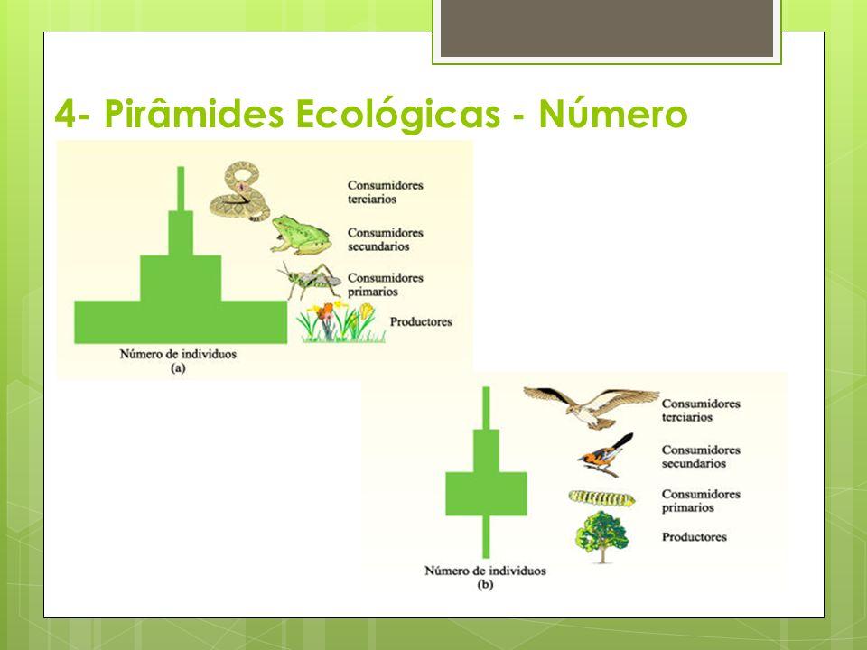 4- Pirâmides Ecológicas - Número