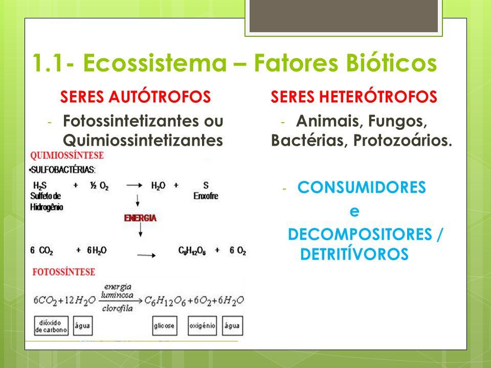1.1- Ecossistema – Fatores Bióticos
