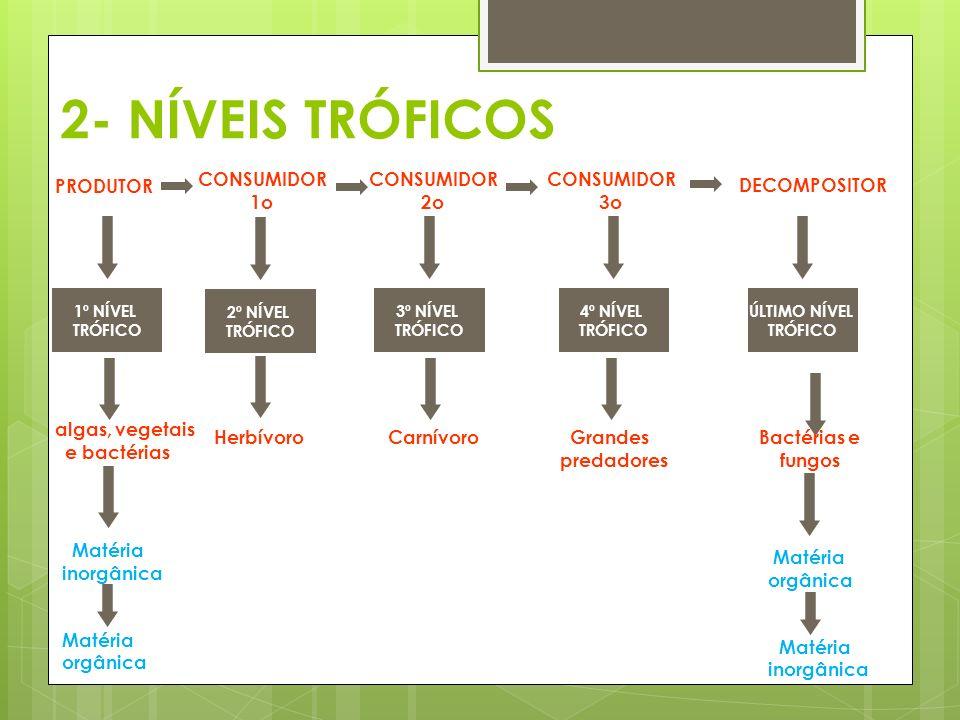 2- NÍVEIS TRÓFICOS PRODUTOR CONSUMIDOR 1o CONSUMIDOR 2o CONSUMIDOR 3o