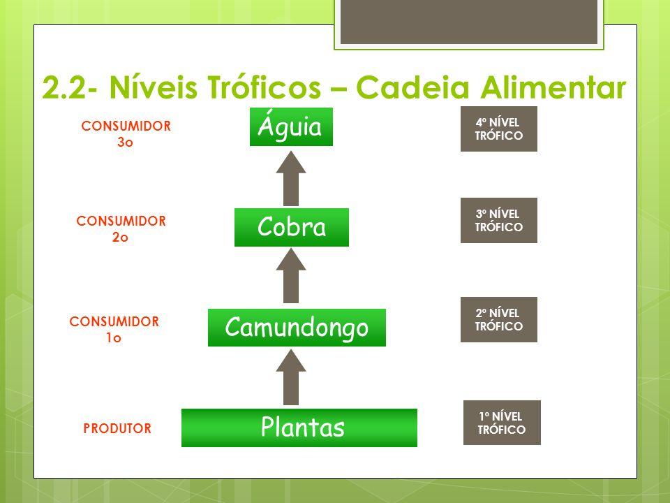 2.2- Níveis Tróficos – Cadeia Alimentar