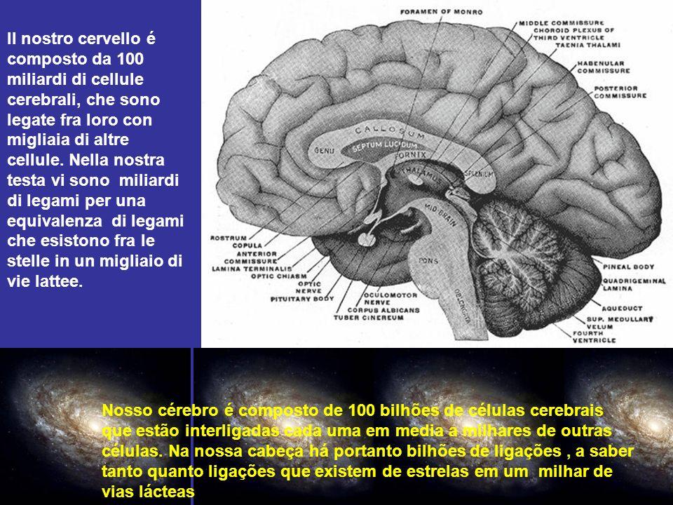 Il nostro cervello é composto da 100 miliardi di cellule cerebrali, che sono