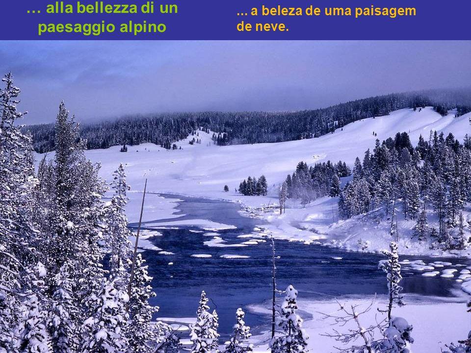 … alla bellezza di un paesaggio alpino