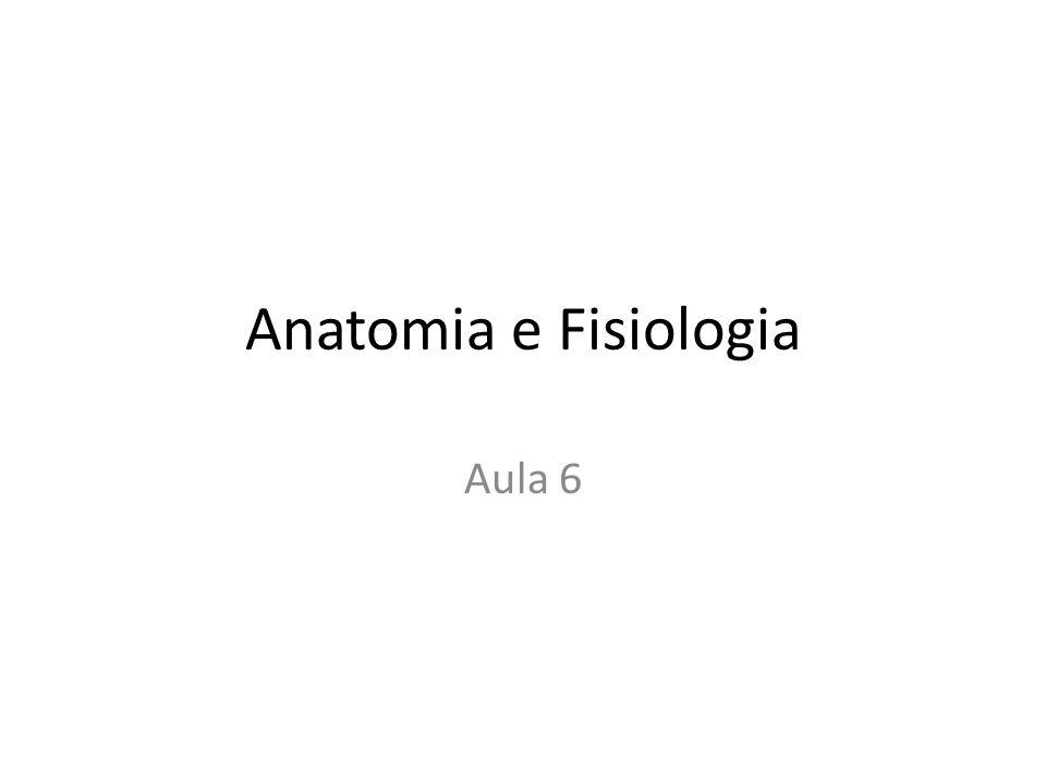 Anatomia e Fisiologia Aula 6