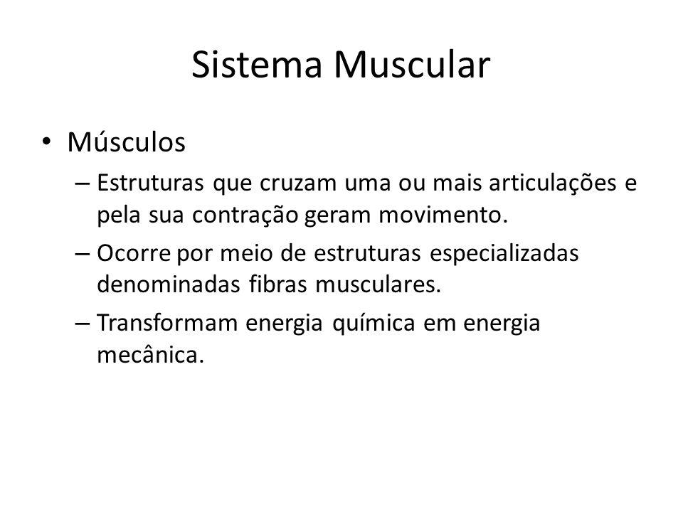 Sistema Muscular Músculos