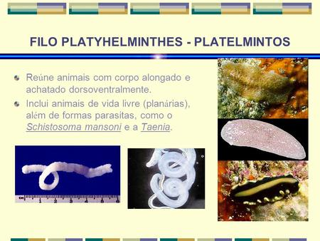 FILO PLATYHELMINTHES - PLATELMINTOS