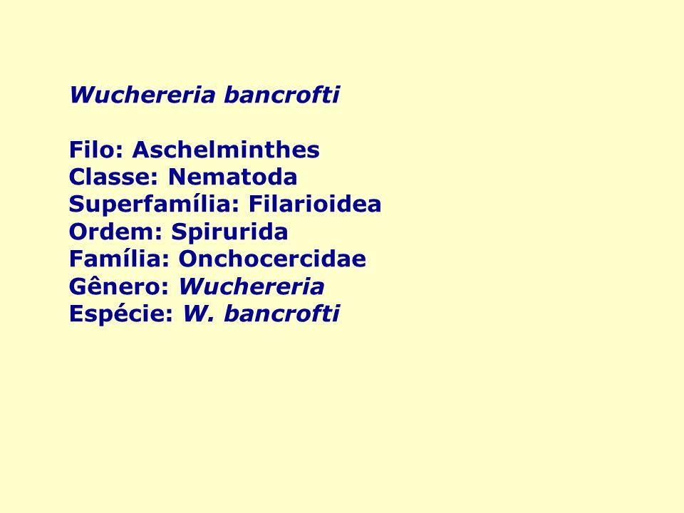 Aschelminthes ppt