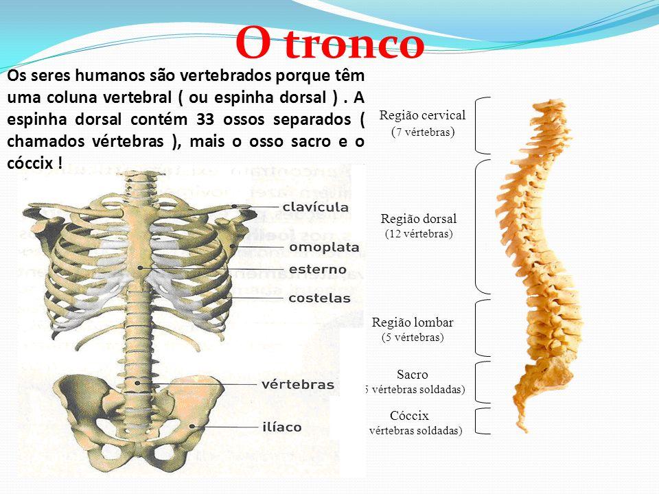 Lujo Vértebras Fotos Humanos Composición - Imágenes de Anatomía ...