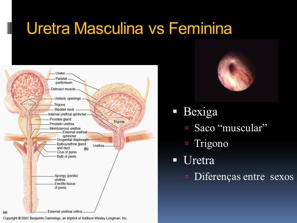 Diferença entre anatomia e fisiologia