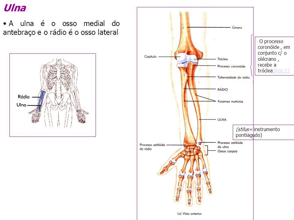 Divis o do esqueleto ppt video online carregar for O osso esterno e dividido em