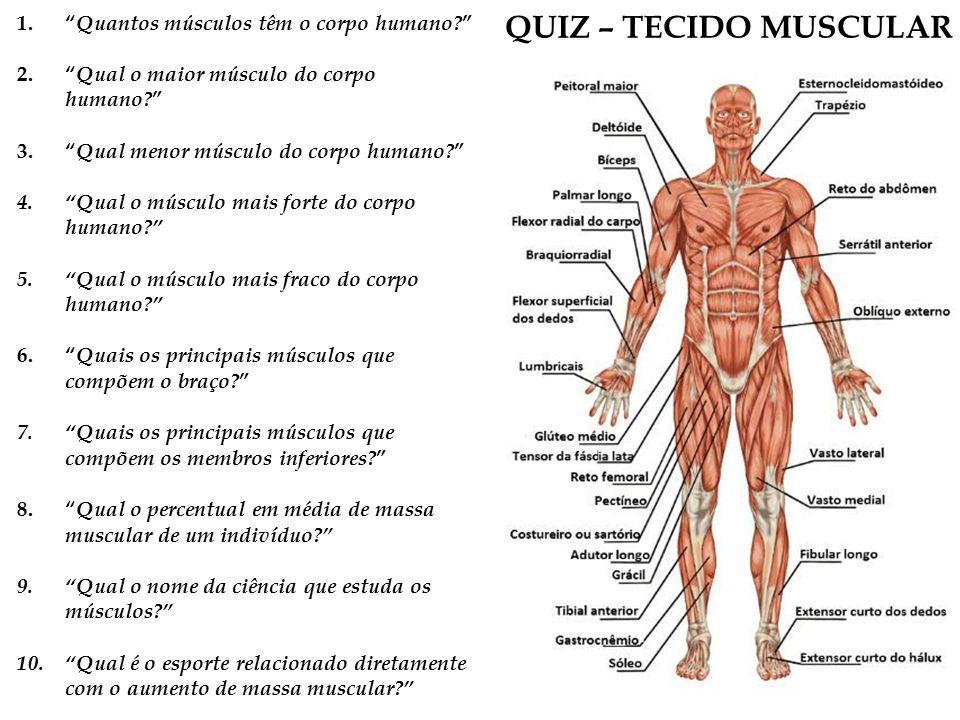 Lujo Diagrama De La Anatomía Muscular Humana Embellecimiento ...