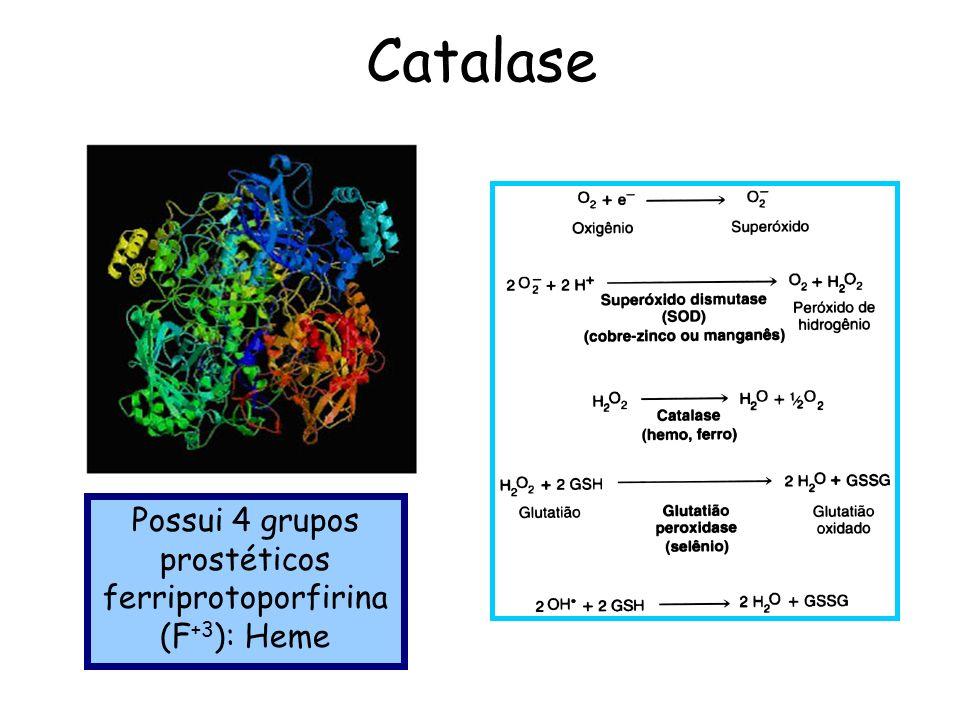 ENZIMAS: CATALASE, PEROXIDASE - ppt carregar