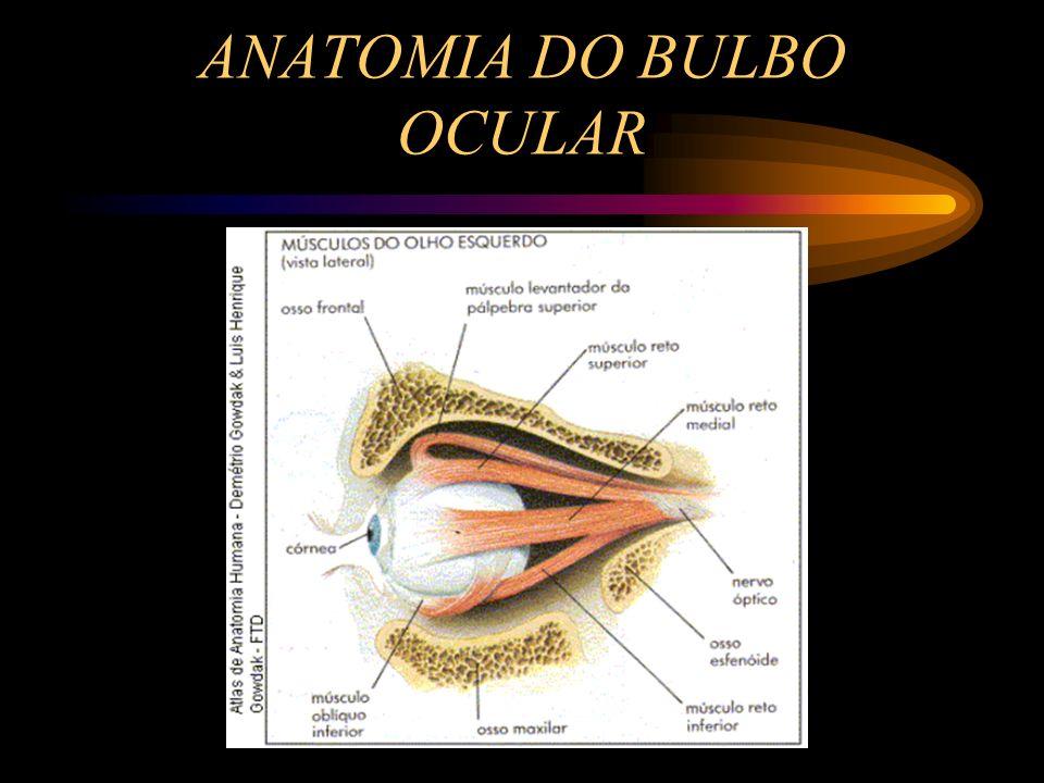 Atractivo Anatomía Del Vídeo Ocular Patrón - Anatomía de Las ...