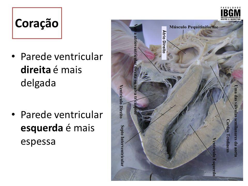 Anatomia Do Sistema Cardiovascular Dos Animais Domésticos