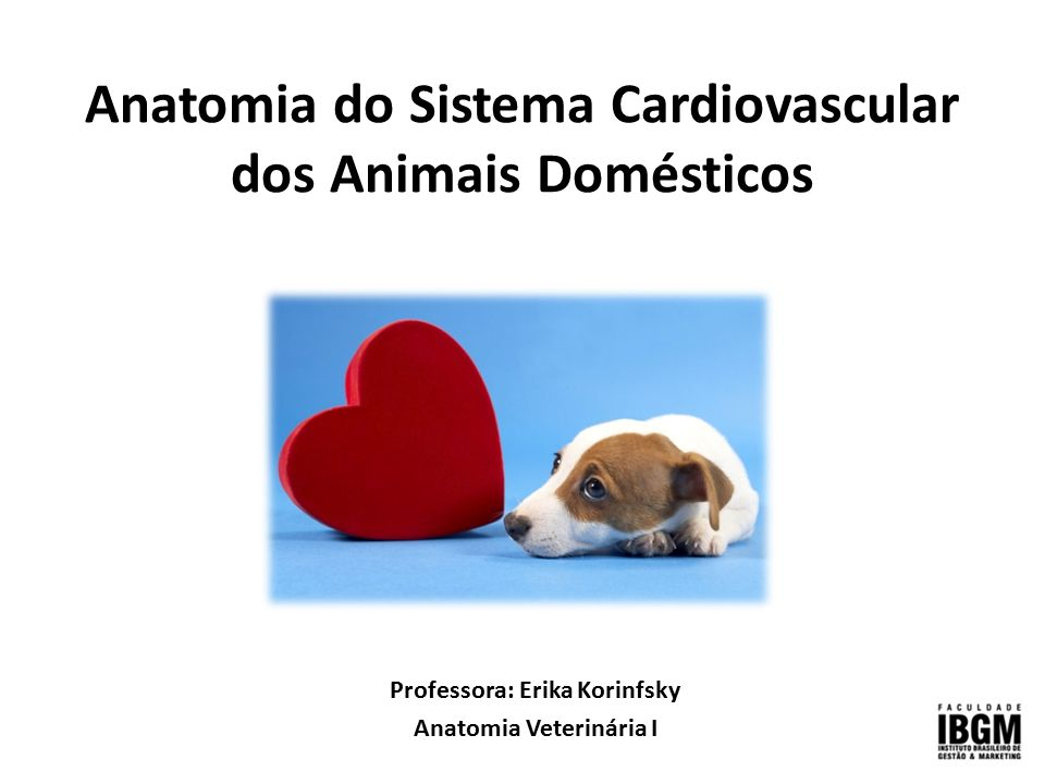 Anatomia do Sistema Cardiovascular dos Animais Domésticos - ppt ...