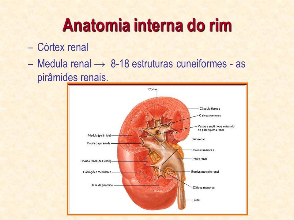 Vistoso Anatomía De Superficie Riñón Motivo - Anatomía de Las ...