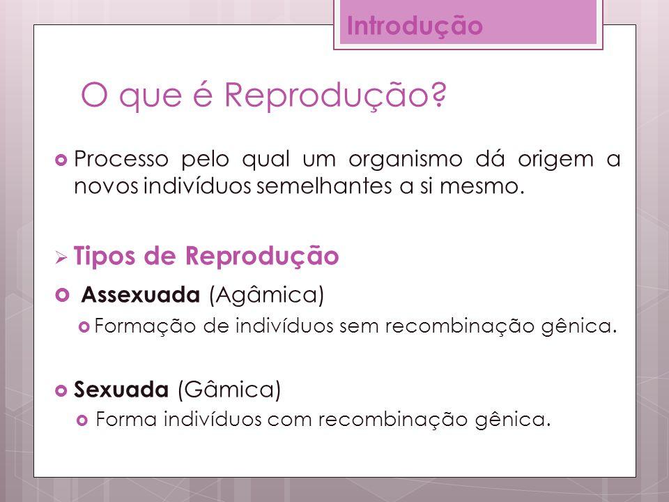 0ae7d312bca Reprodução Profª  Priscila Almeida Graduanda em Ciências Biológicas ...