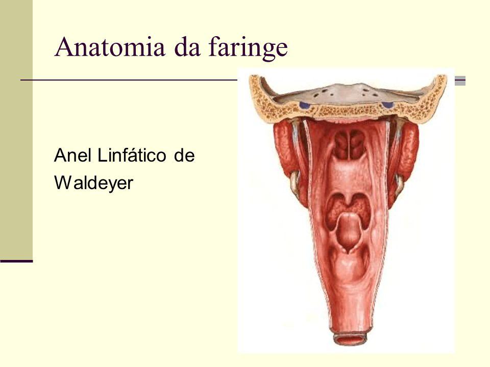 Anatomia da faringe Anel Linfático de Waldeyer. - ppt video online ...