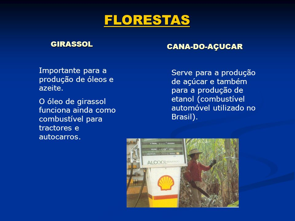 FLORESTAS GIRASSOL CANA-DO-AÇUCAR