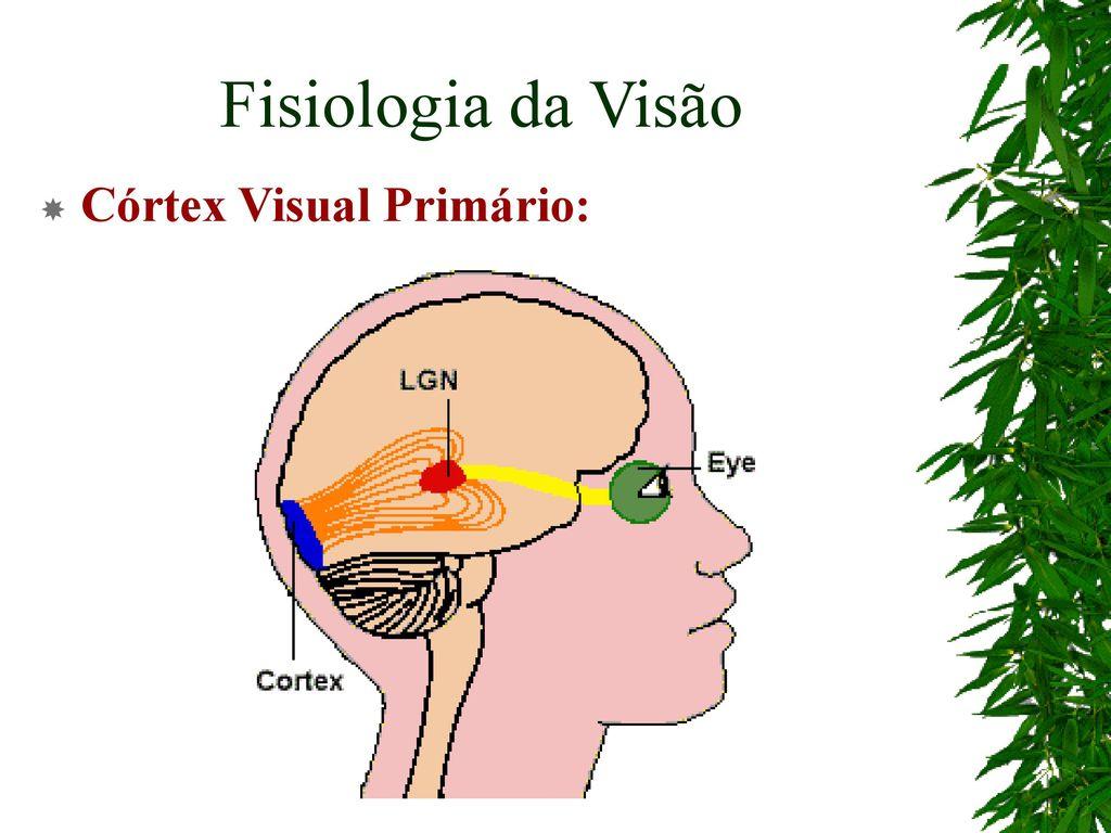 Atenção Visual Fabrício Rodrigues. - ppt carregar