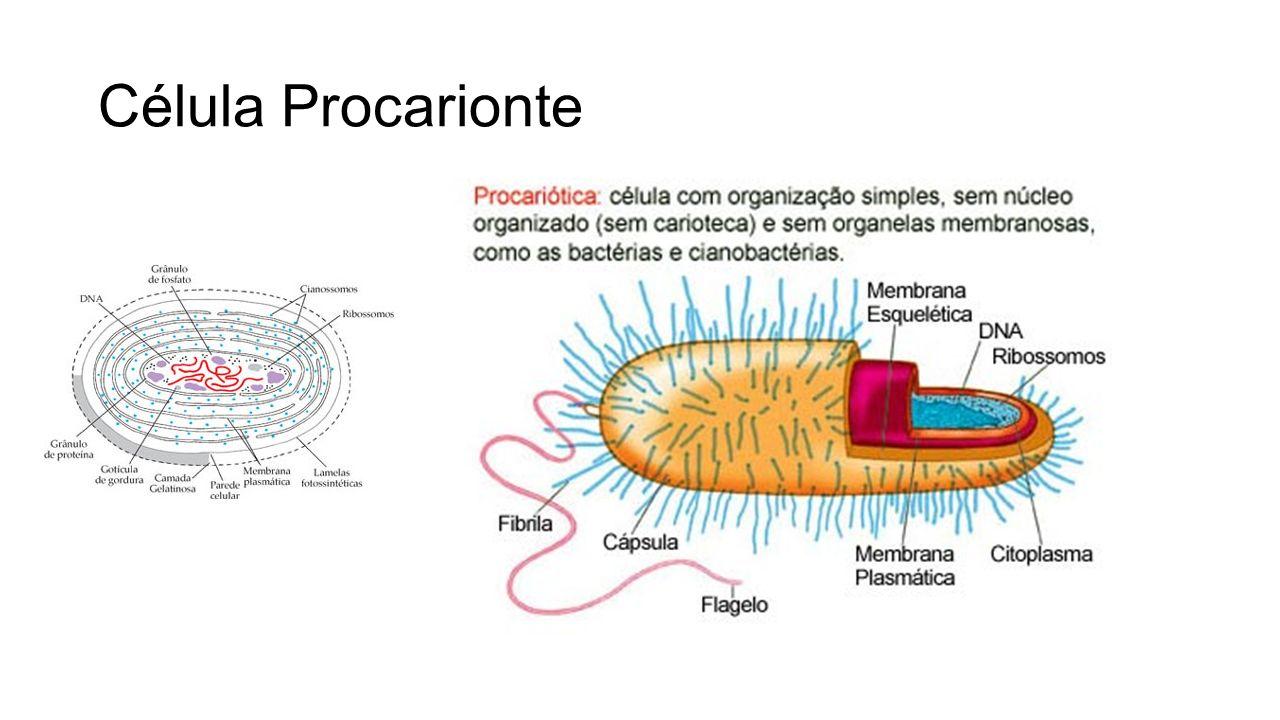 Ppt Carregar: Célula Procarionte.