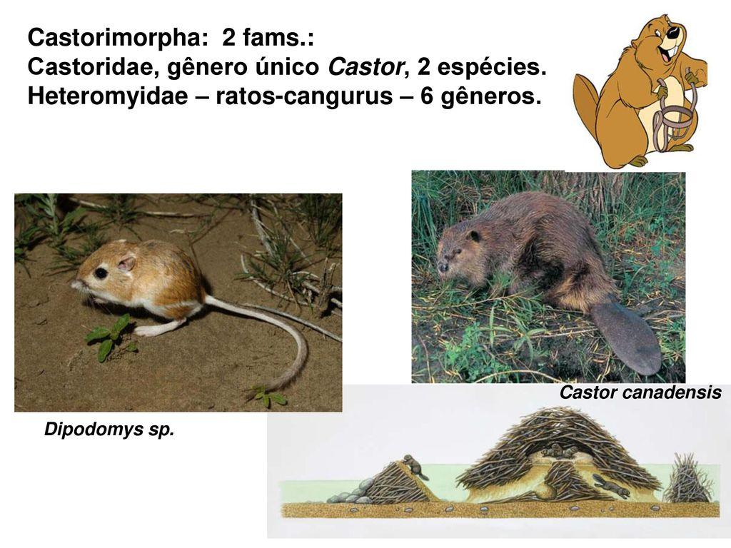 chiroptera 1110 espécies em w r 2005 20 49 do total de
