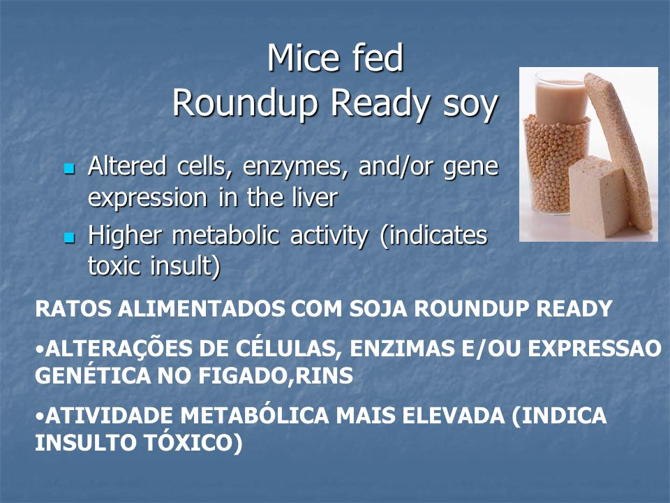 Mice fed Roundup Ready soy