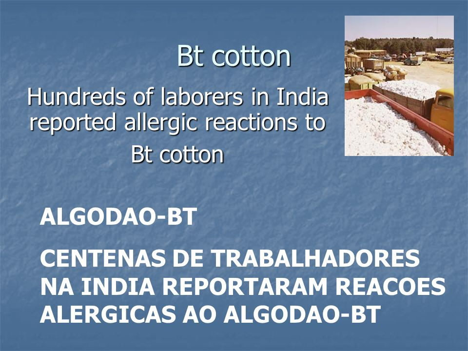 Hundreds of laborers in India reported allergic reactions to Bt cotton