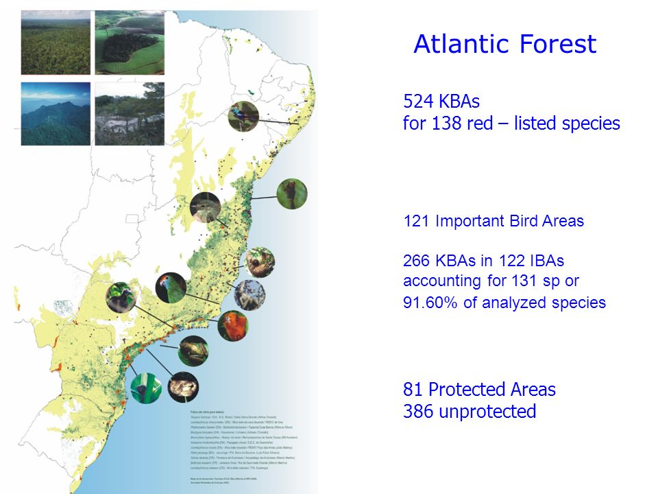 Atlantic Forest 524 KBAs for 138 red – listed species