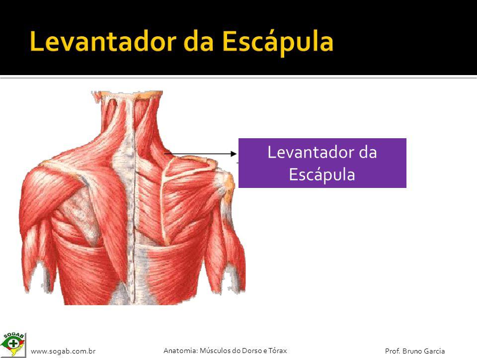 Anatomia: Dorso e Tórax - ppt carregar
