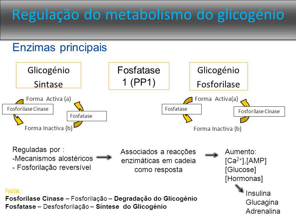 Regulação do metabolismo do glicogénio